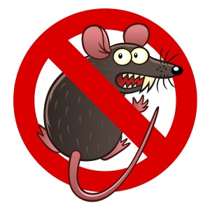 Prevent Rodents and Rodent Damage in Beaverton, OR