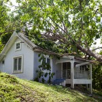 how to deal with a fallen tree in Portland, OR