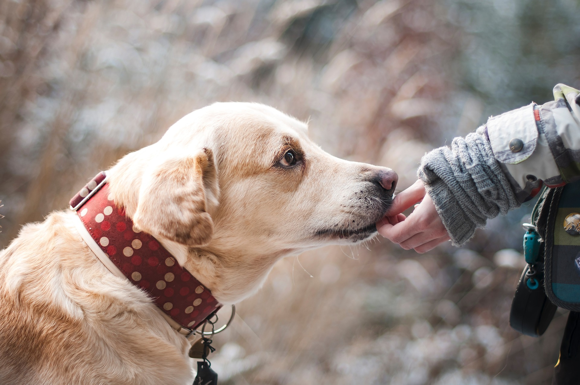 Liability Insurance Coverage for Dog Bite Claims Beaverton, OR
